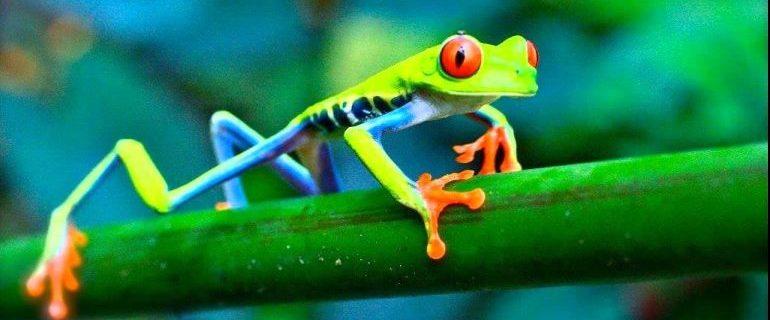 Притча о лягушке, дошедшей до цели