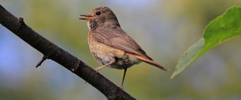 Притча о маленькой серой птичке